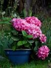flower-in-pot